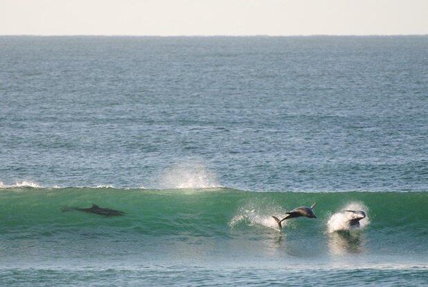 Yamba Surfunation Surfunation